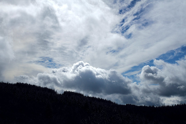 Clouds & firs