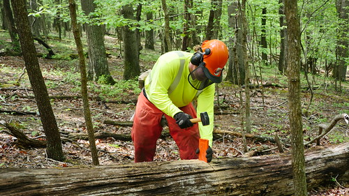 Photo of worker splitting log in the forest