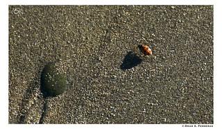 Miss Ladybug | by omarferreras@hotmail.com