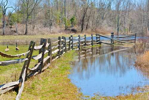 flood puddle reflection water geese canadiangeese wood wooden field farm pond quinebaugriver quinebaug river oldsturbridge sturbridge massachusetts spring landscape hff davelawler chancyrendezvous blurgasm lawler