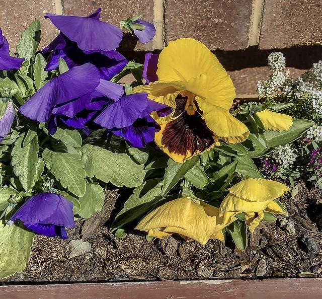 Purple Brown flower