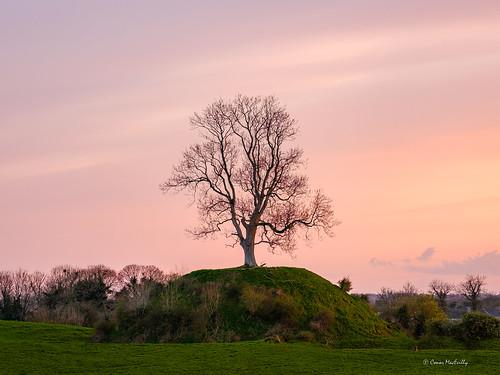 medieval rabbit warren cloncurry kildare ireland irelandsancienteast hill lonetree