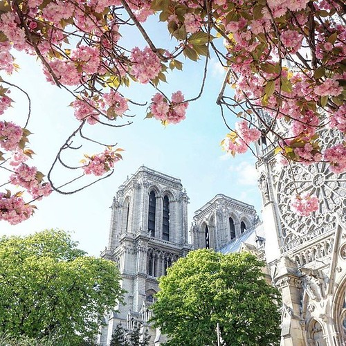 Spring Spotter: Where to Find Cherry Blossoms in Paris https://buff.ly/2GtW8EN via @solosophieblog https://ift.tt/2HQXwTv | by expatsparis1