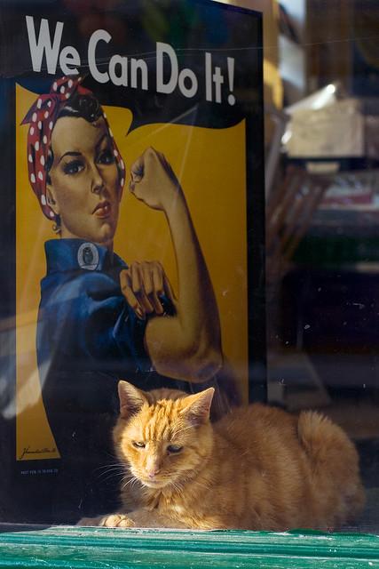 Somebody else's cat XCIII