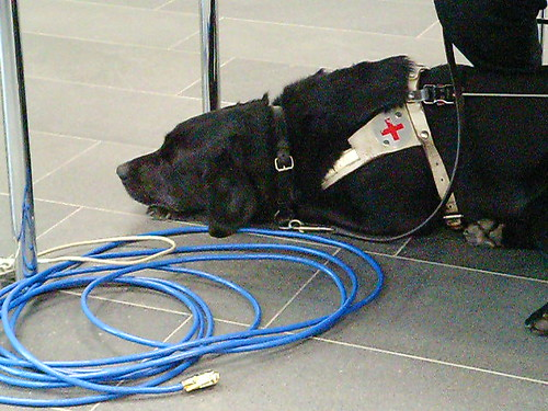 Guide Dog with Ethernet Access | by Martin Kliehm