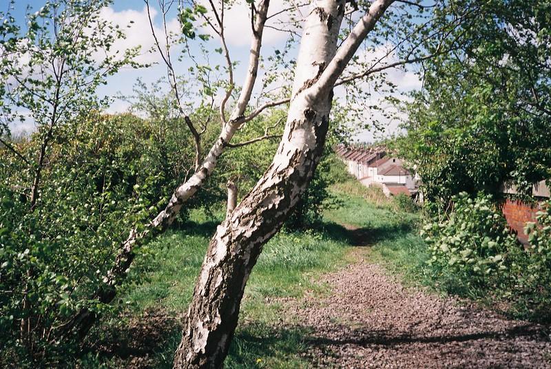 Wind-shaped trees