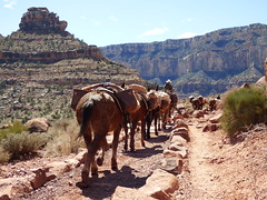 Grand Canyon - South Kaibab Trail, nearing Skeleton Point, mule train heading up