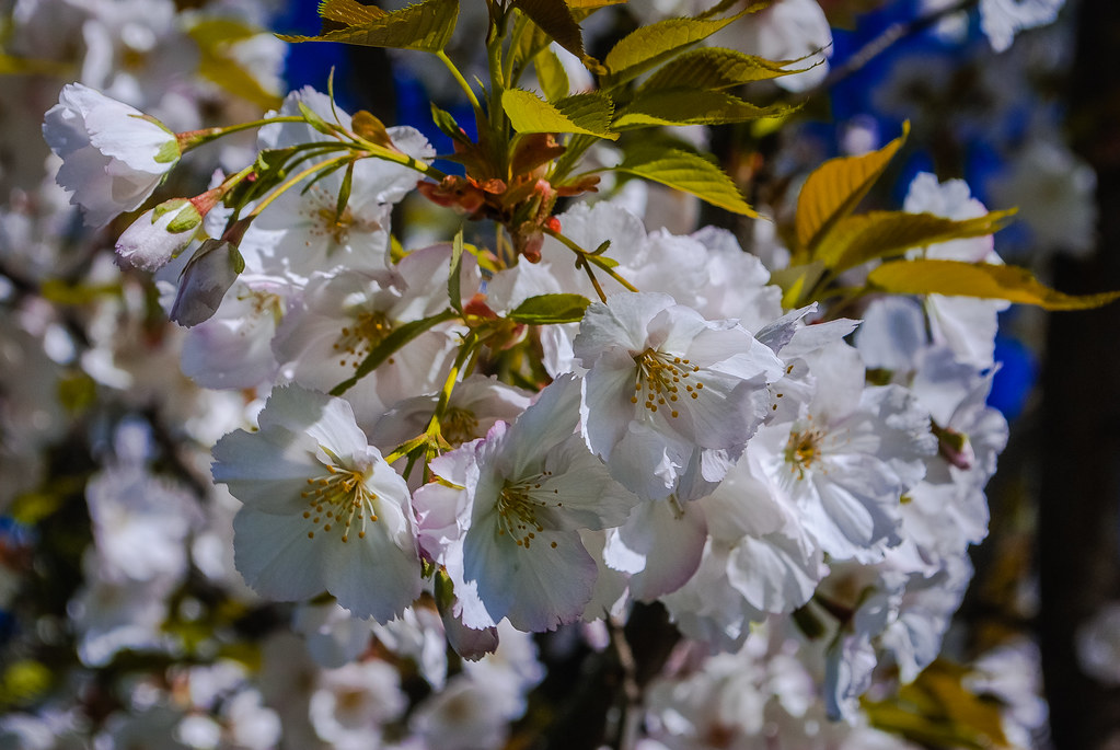 Hermosas flores y hermosa foto. 10:48:47 DSC_7882