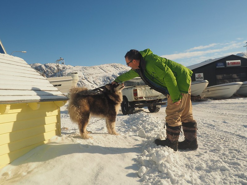 Dog town. The settlement is home to a few thousand people, and almost as many husky dogs