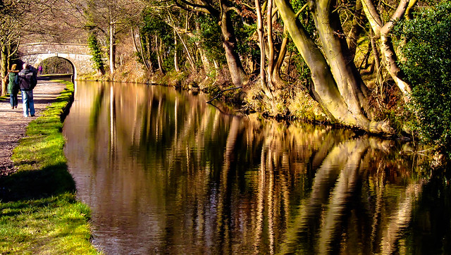 Trees Reflected in the Canal