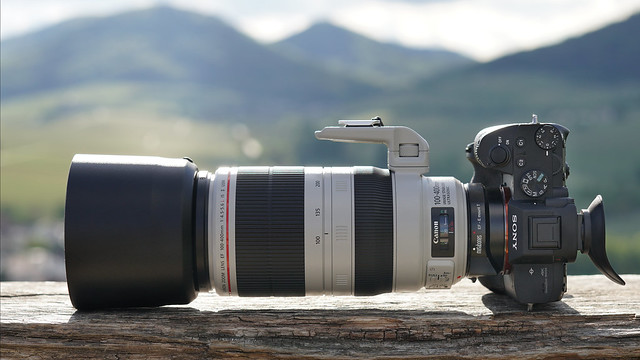 SONY ⍺7III & Canon EF100~400/4.5~5.6L IS II on Metabones T IV seen by SONY ⍺6500 & Sigma 50mm ƒf/1.4 DG HSM | Art on Sigma MC-11