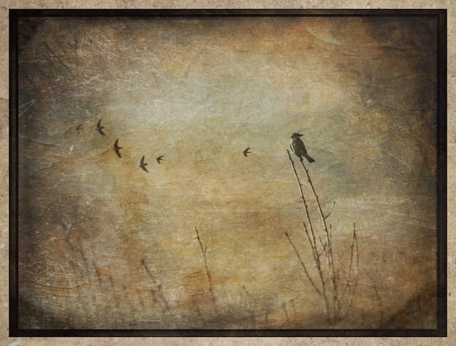 Birds #distressedfx #distressedfxapp #tintype #snapseed #rippix #formulasapp #formulas #artistry_flair #everything_edited_ #theappwhisperer #textured #texture_art #texturedphotography #texturedphoto