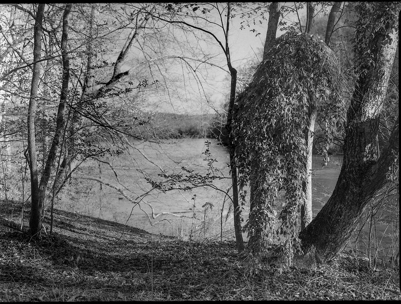 tree forms and movements, riverside, French Broad River, Biltmore Estate, Asheville, North Carolina, Mamiya 645 Pro, mamiya sekor 45mm f-2.8, Arista.Edu 200, Ilford Ilfosol 3 developer, mid April 2018