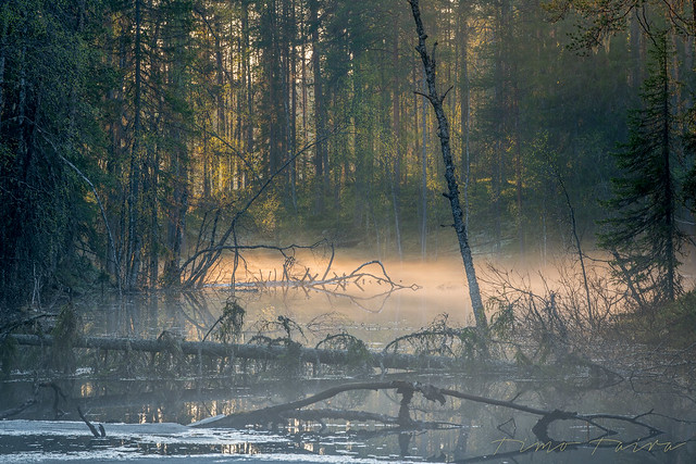 Hiidenportti National Park in the eastern part of Finland.
