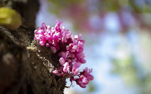 Primavera en Alcalá