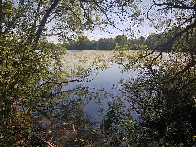 Eastwell_Lake