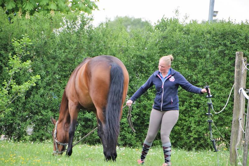 Horse 02.05 (2)