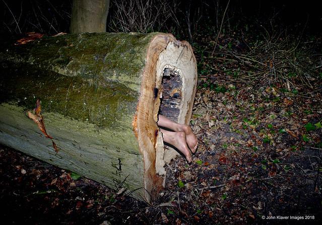 John Klaver-feet out of a tree