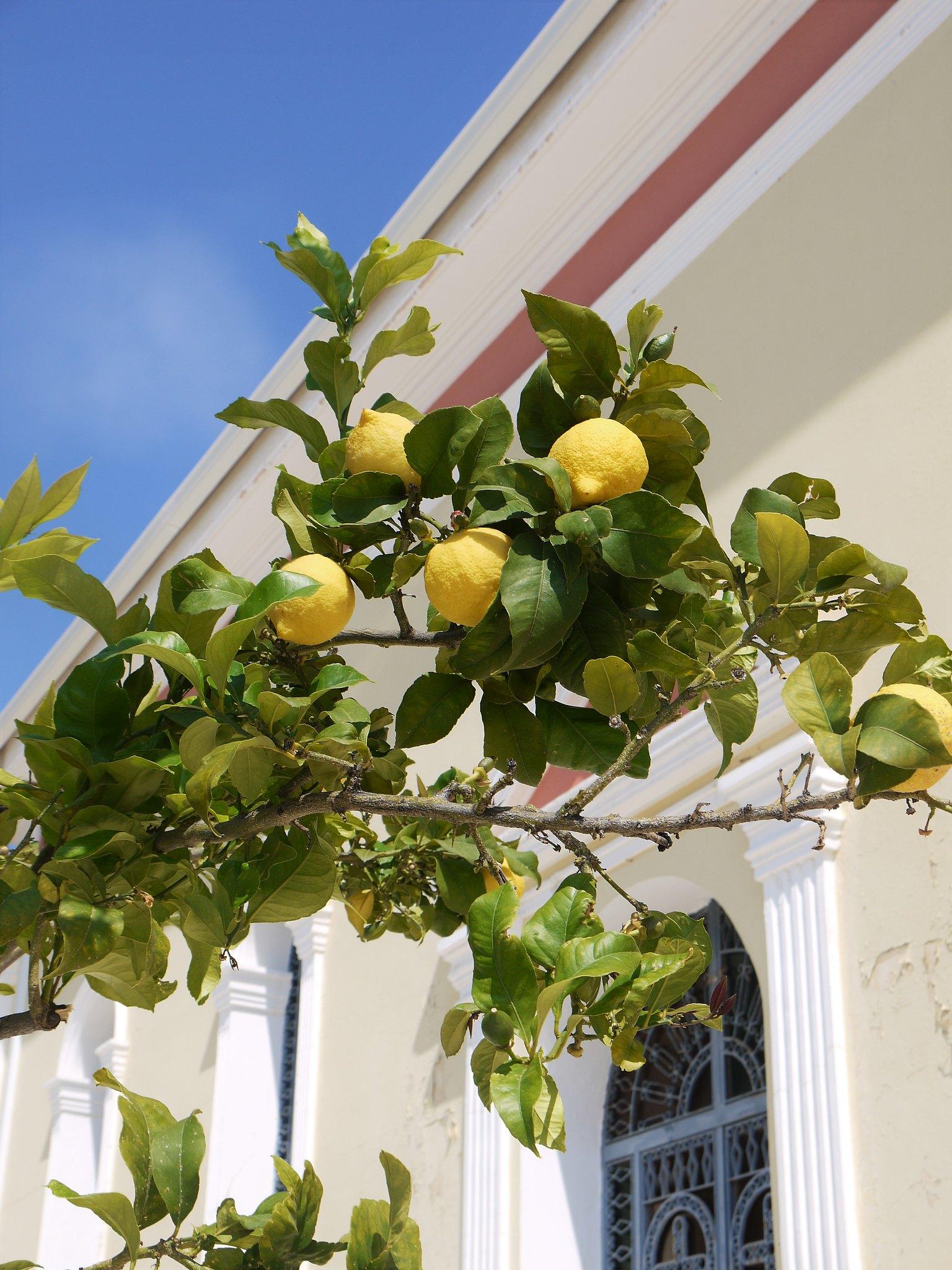 Skala Lemons