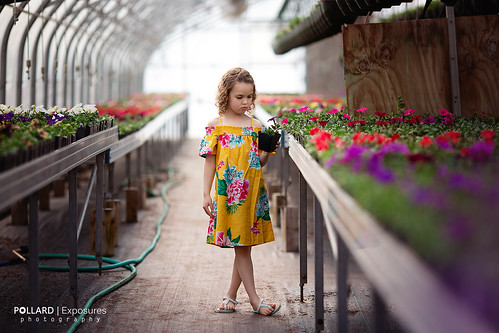 Greenhouse   by Pollard Exposures Photography
