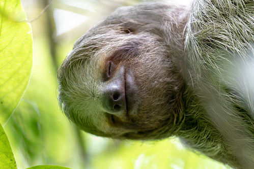 Sloth | by Mick Thompson1