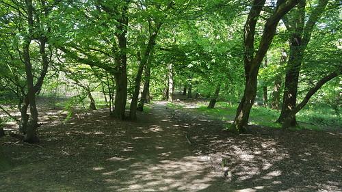 Horsenden Hill walk