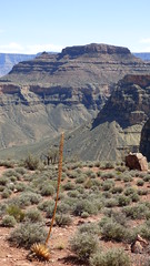 Grand Canyon - South Kaibab Trail, nearing Skeleton Point, looking east