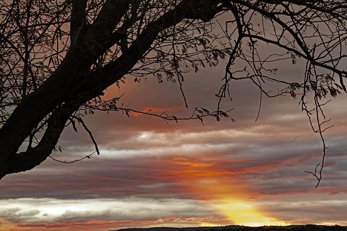 sunset tree richmond lowlands storm cloud 7d silhouette ray 2470