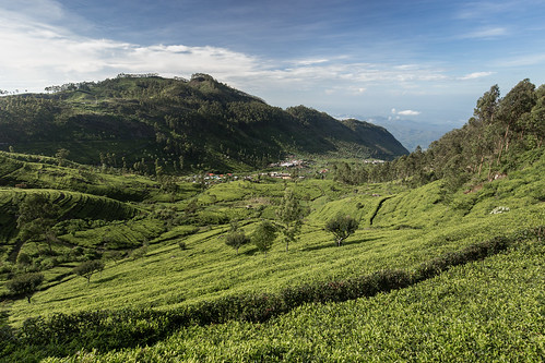 srilanka dambatenne dambatenneteaplantation canon tea haputale nature green mountains sky clouds