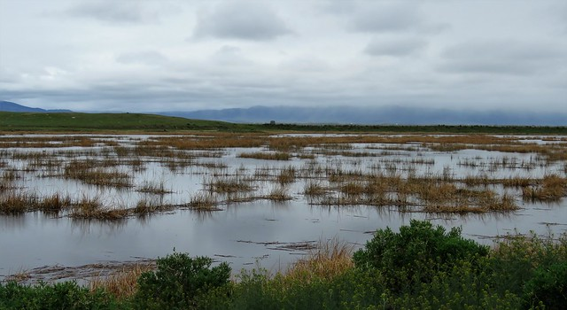 Wyoming Wetland