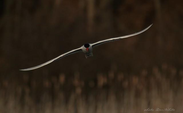 taking a tern