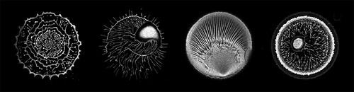 Robert Malinowski - 'Bacterial Cities'