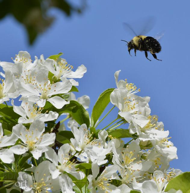 bumblebeeBDMCart1