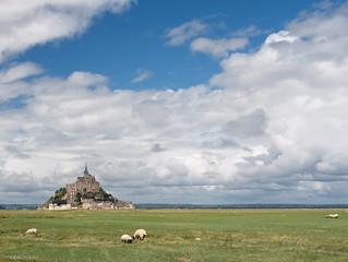 Sheeps @ Mont-Saint-Michel | by Mauro Rado