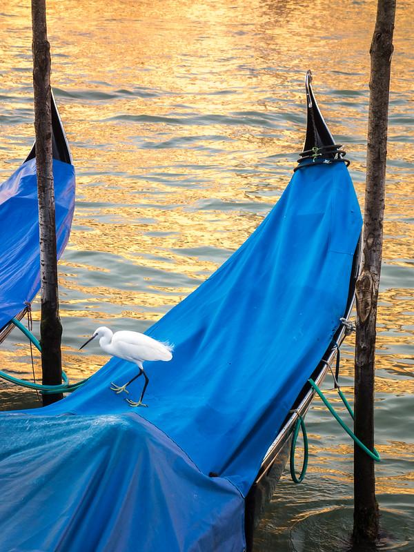 Venise or et azur