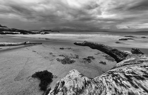 beach hinsby taroona tasmania australia sand driftwood tree fallen sky shoreline seascape derwentriver water sigma 1224mm