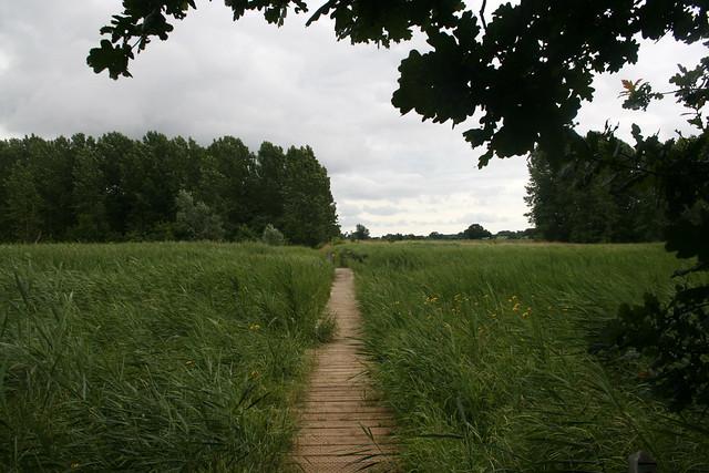 The Suffolk Coast path near Snape