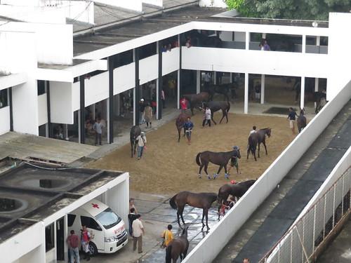 ロイヤルターフクラブ競馬場の馬房前で輪乗りする馬たち