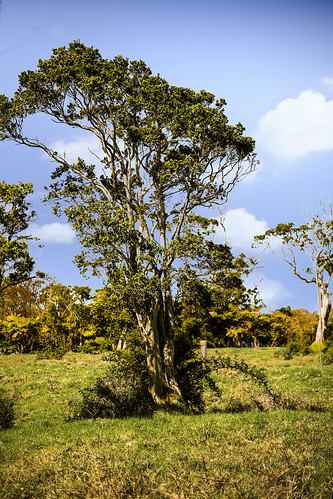 hawaii tree meadow woods bigisland plant volcano village wyojones np