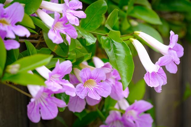 Spring 4782