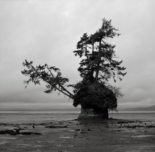 Island, Washington