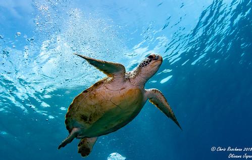 Sea Turtle under shot