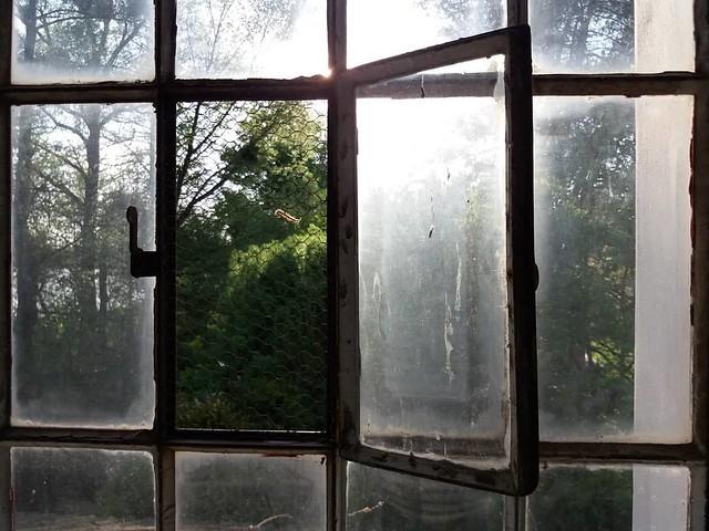 spring behind the window