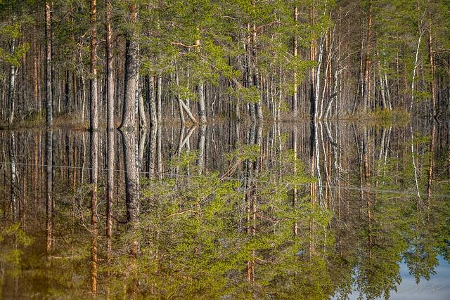 Älänteen luonnonsuojelualue - Älänne nature reserve