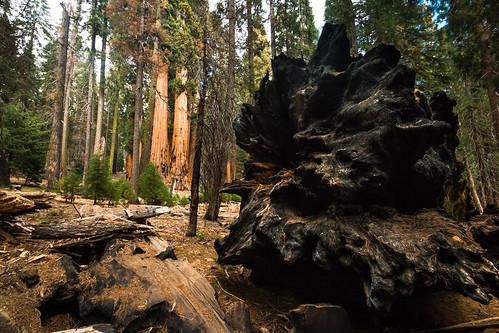 Sequoia National Park | by kenfagerdotcom