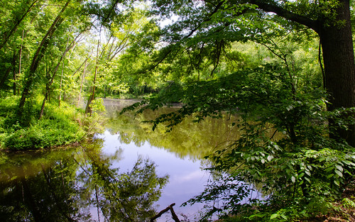 trees landscape outside nature indianmountain tennessee lake statepark publicland water jellico unitedstates us