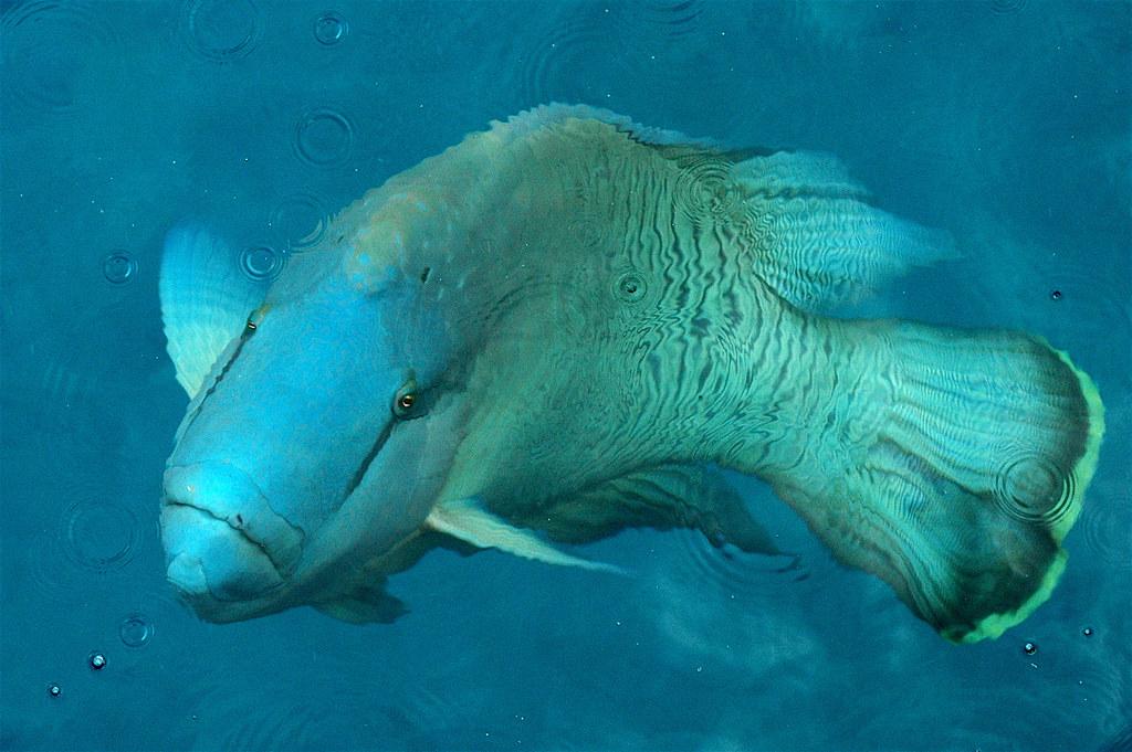 Www Big Fish