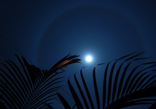 The Moon's Halo - Palm 2   by thombo2