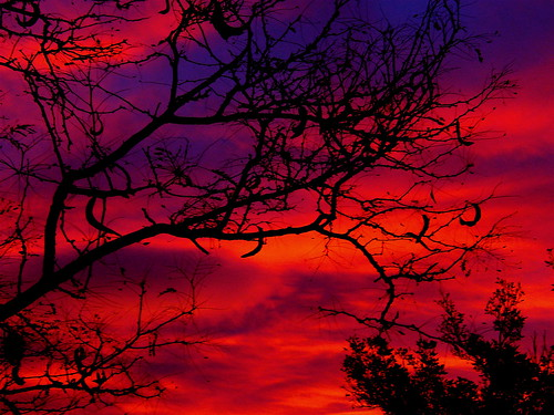 trees sky color clouds sunrise colorado denver digitallyaltered