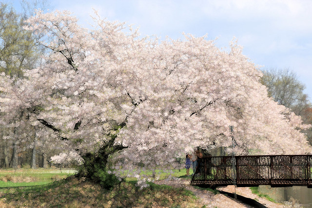 Bubble Blossoms
